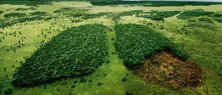 Article : Sauvons la Terre